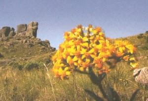 fauna-parque-nacional-itatiaia